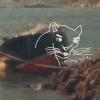"Vans' ""Cougar Island"" Video"