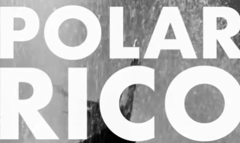 Nike SB   Polar Rico